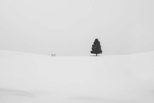 Black and white shot of an isolated pine tree covered with snow in a snowy area in winter