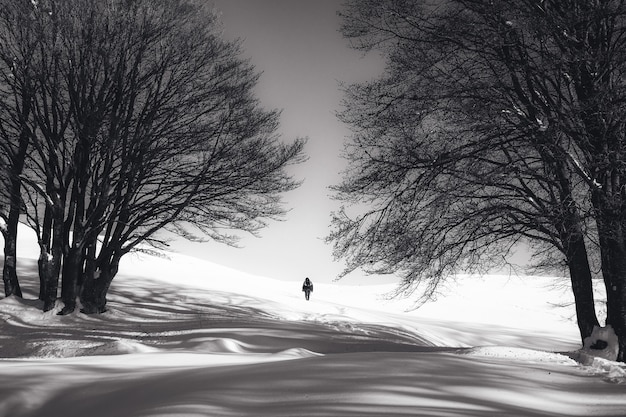 Black and white shot of a person standing on snow and two bare trees