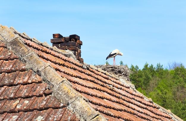 瓦屋根の巣にいる白黒コウノトリ。
