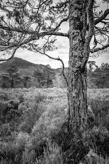 In bianco e nero di un albero