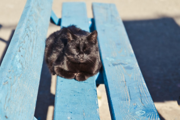 Black yard cat lying on a wooden bench on a sunny day