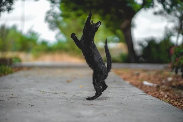 フレーム外で何かを狩ろうとしている黒い若い猫