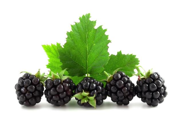 흰색 배경에 고립 된 잎 블랙베리입니다. 신선한 딸기, 건강한 과일.