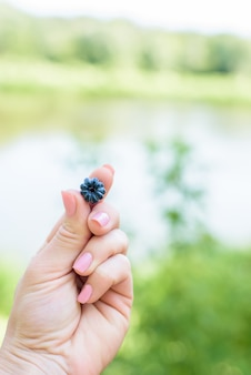 Blackberry on the finger, berry holds a female hand . one berry is dark blue. close up