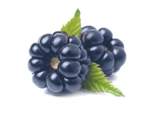 블랙베리 과일