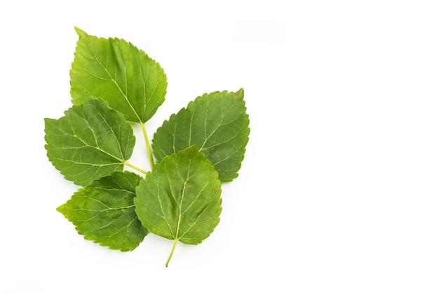 ブラックベリーの葉は白い背景で隔離