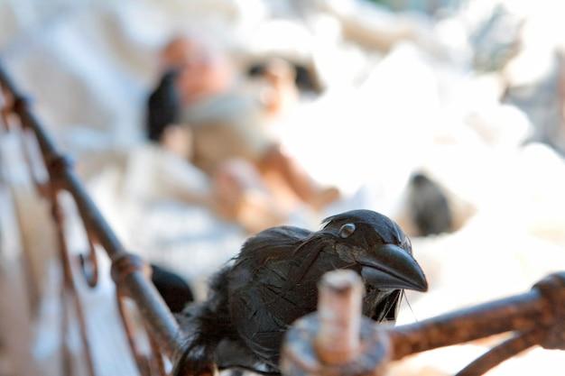 Blackbird perched on antique crib rail