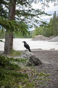 湖の近くの石の上に座っているクロウタドリ