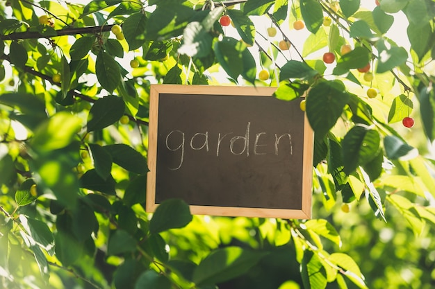 Blackboard hanging on tree at garden with written text