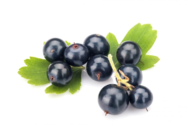 Blackcurrant isolated