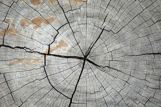 Дерево blackground taxture