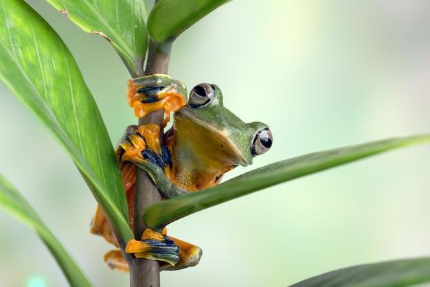 잎사귀에 매달려 있는 검은줄무늬 청개구리