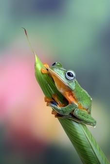 잎에 검은 물갈퀴 나무 개구리
