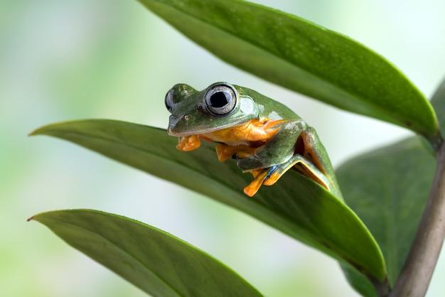 Древесная лягушка с черной паутиной на листе