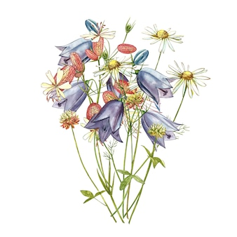 Bladder campion and bells flowers. watercolor set of drawing cornflowers, floral elements, hand drawn botanical illustration.