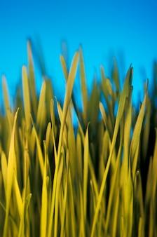 Лезвия травы, крупный план