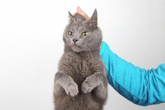 うなじに抱かれた灰色の猫のせい