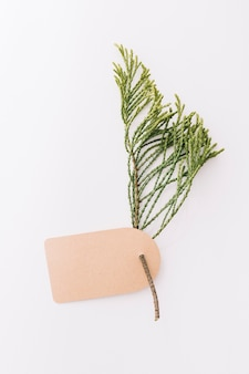 Blank brown tag with cedar twig on white background