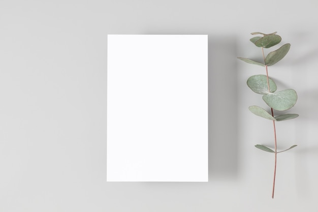 Blank card or note with eucalyptus leaves on white background