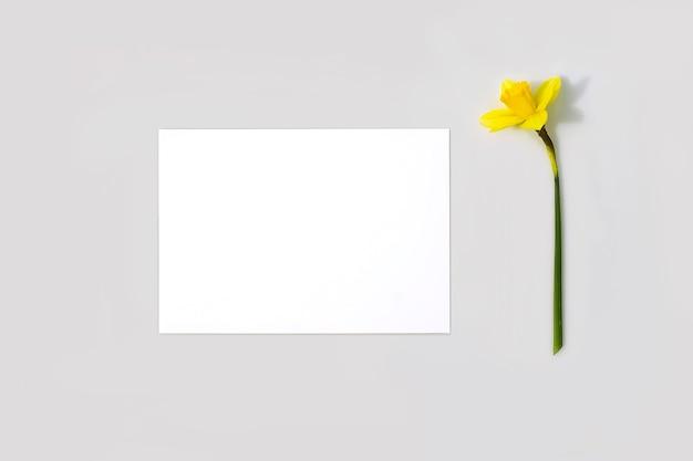 Пустая карточка или записка и цветок нарцисса с жесткими тенями