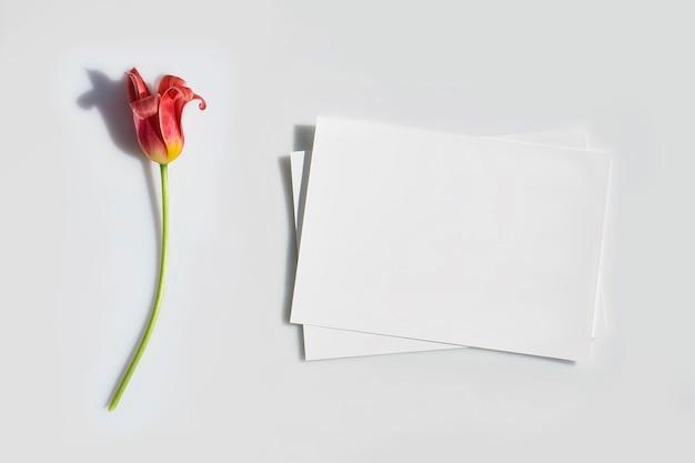 Пустая карточка или записка и цветок тюльпана с жесткой тенью Premium Фотографии