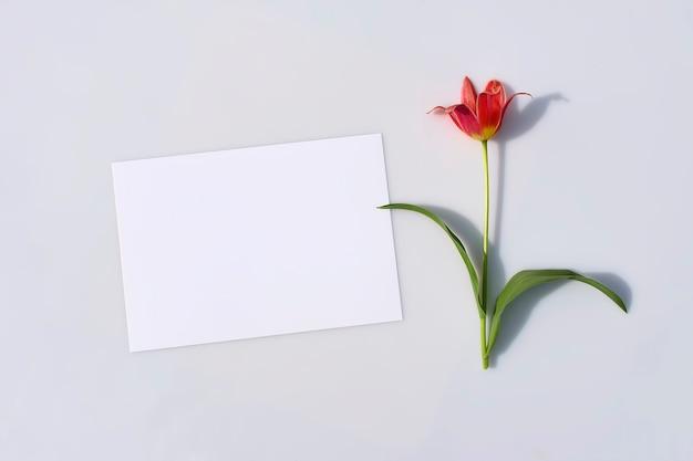 Пустая карточка или записка и цветок тюльпана с жесткой тенью