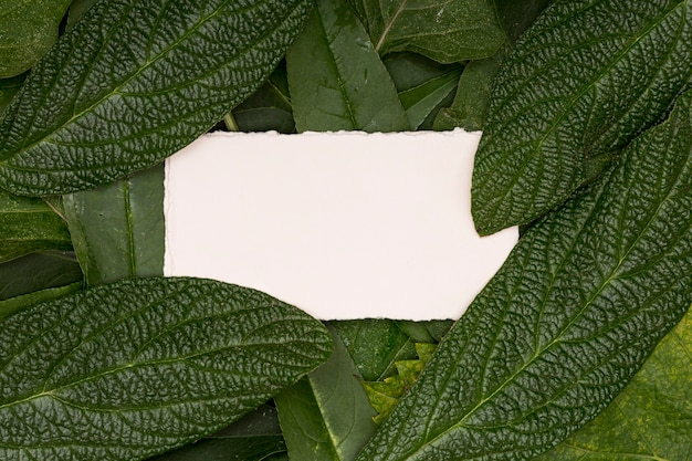Blank card surrounded by foliage