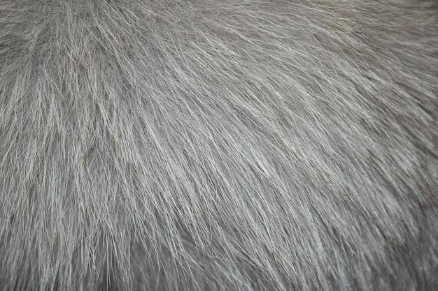 空白のきれいな灰色の自然な毛皮の背景