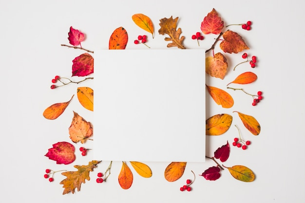Blank copy space with colorful autumn leaves frame