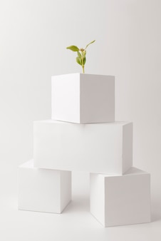 Blank geometric forms with plants growing for sustainability concept