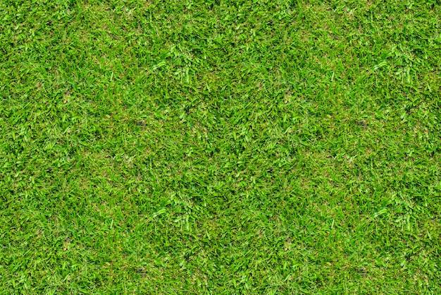 Пустая зеленая трава для фона
