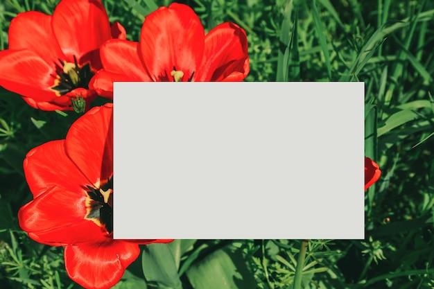 ポピーと芝生のフィールド、春のposcardモックアップの空白のグリーティングカード