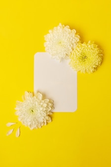 Blank isolated white card on the bold yellow background with beautiful chrysanthemums on it