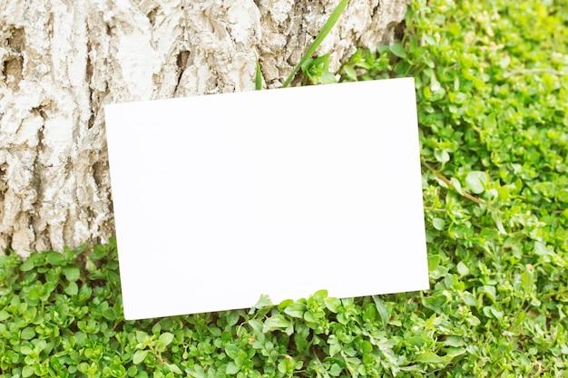 Blank paper on green grass.