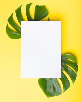 Blank paper over the monstera green leaves on yellow background