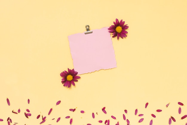 Blank paper with flowers and petals