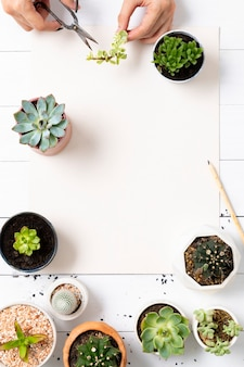 Blank paper with small houseplants flat lay