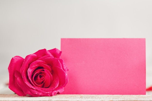 Blank pink greeting paper card with one pink rose