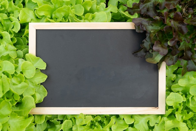 Blank space blackboard on hydroponic vegetable for add text