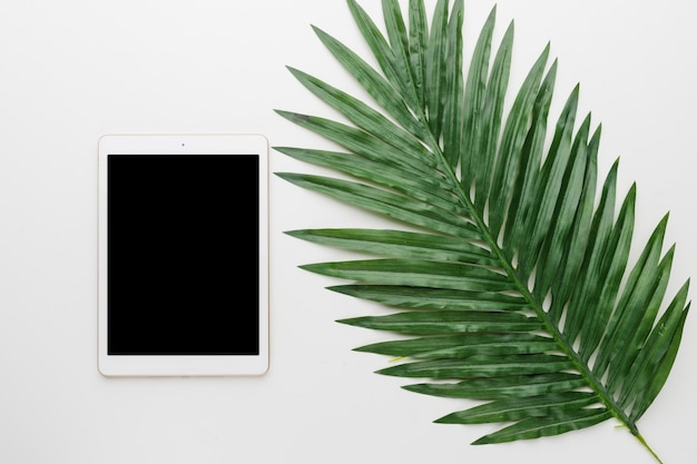 Blank tablet and tree leaf on light background