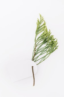 Blank tag with cedar twig isolated on white backdrop
