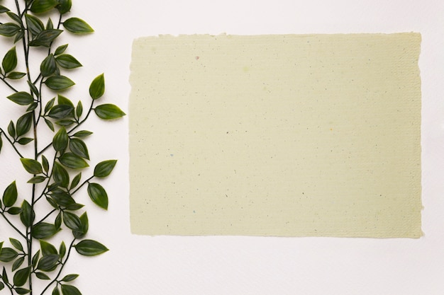 Blank textured paper near the green plant on white backdrop