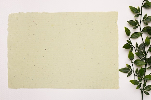 Blank textured paper near the plant leaves on white backdrop