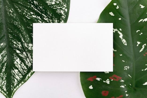 Scheda bianca vuota su foglie verdi
