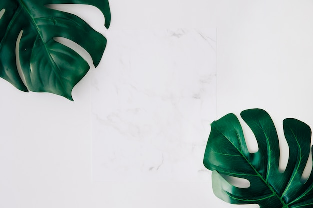 Blank white paper and green monstera leaves on white background
