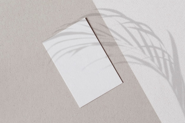 Blank white paper with palm leaves shadow on a two tone wall