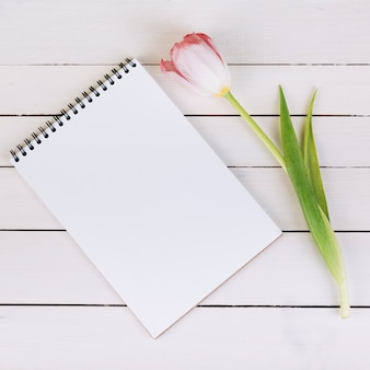 Blank white spiral notepad and fresh pink tulip on wooden desk