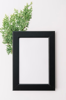 Blank wooden frame with cedar twig isolated on white background