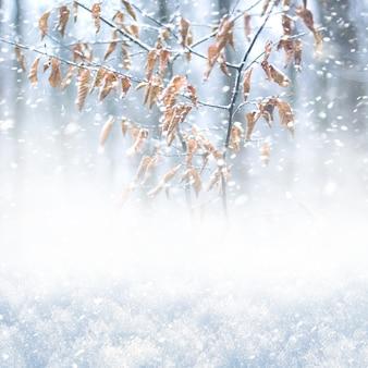 森の中の吹雪、冬の正方形の背景