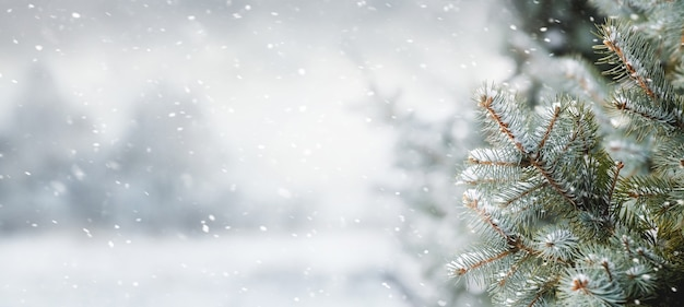 トウヒの森の吹雪、クリスマスと新年の背景